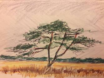 Pine by langeboom