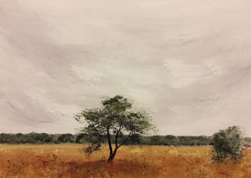 Boetelerveld by langeboom