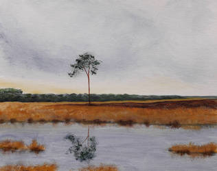 Lone Pine by langeboom