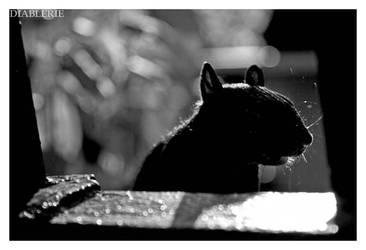 squirrel by diablerie