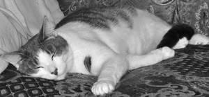 Sweet dreams by priwax