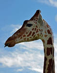 Giraffe Portrait by priwax