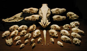 My Skulls by Orrutpluks