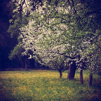 April by YourEndlessDream