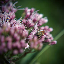 The Bee by YourEndlessDream