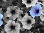 Flower by BadKarma654