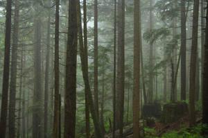 Misty Forest by salohcin19