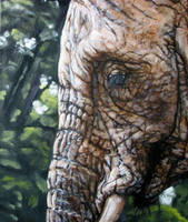 Elephant portrait by Katie-Z