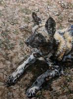 Wild dog portrait by Katie-Z