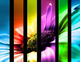 ...Colourful...Flower... by TaiheiyoYuriko