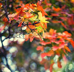 autumn leaves by Bloddroppe-nature