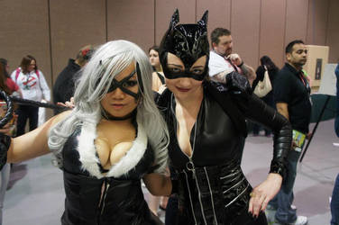 BlackCat and Catwoman by Milk-Kyandi