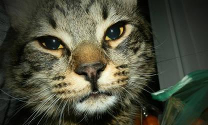 Crazy Tomcat by Ninusqa010309