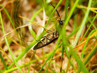 Bug by Ninusqa010309