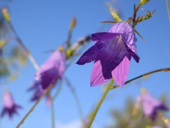 Summer Flower by Ninusqa010309
