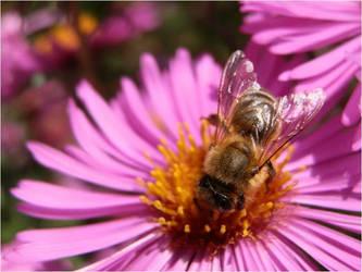 Little bee by Ninusqa010309