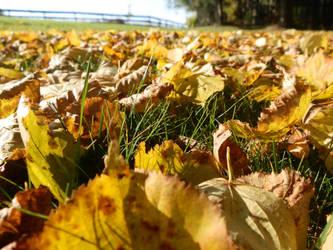 Autumn by Ninusqa010309
