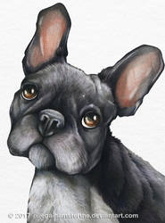 French bulldog by IllegalHamsterThe