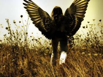 ....angels wings ... by Memphis86
