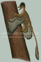 Microraptor gui by BrokenMachine86