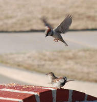 Free Bird Seed by DocMallard