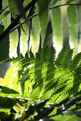 Fern Shadows 3 fb by ValliantEffort