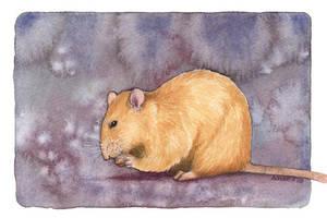 Rat by saraquarelle