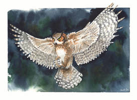 Great Horned Owl by saraquarelle