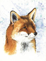 Fox I by saraquarelle
