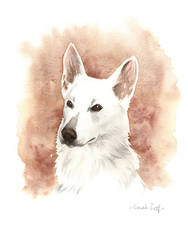 Berger Blanc Suisse by saraquarelle