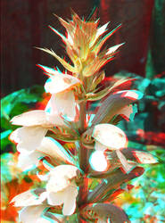 Macro Flowers 3D by carangil