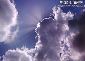 Light On by Cat-n-White
