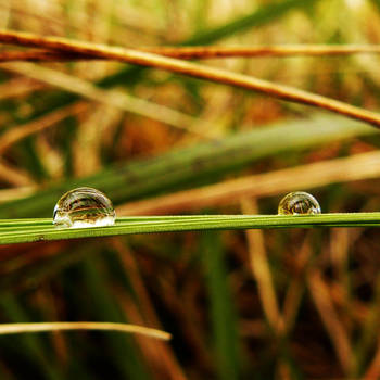 Water droplets on the grass by Tsukiko-chan09