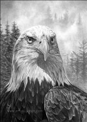 Portrait of an Heir-Bald Eagle by deviant-art-guy