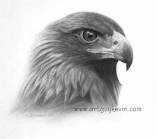 Golden Eagle Portrait by deviant-art-guy