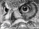 Owl Portrait by deviant-art-guy