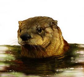 Otter II by KevinNichols