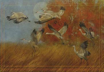 Crane by KevinNichols