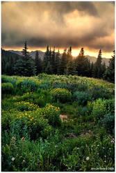 A Wildflower Sundown by kkart