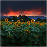Sunsets Storms and Sunflowers by kkart
