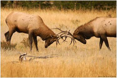 Locking Horns by kkart