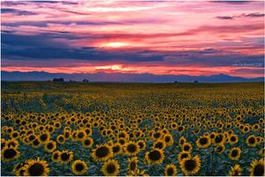 The Field Of Dreams by kkart