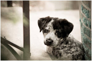 Those Sad Puppy Eyes by kkart