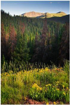 An Evening Mountain Glow by kkart