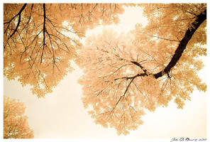 Impressions Of October by kkart