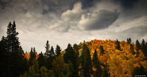 Fall's Fleeting Light by kkart