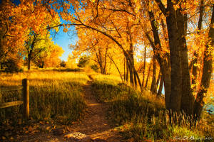 October's Light by kkart
