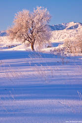 The Winter Tree On The Hill by kkart