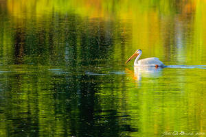 Swimming In Color by kkart