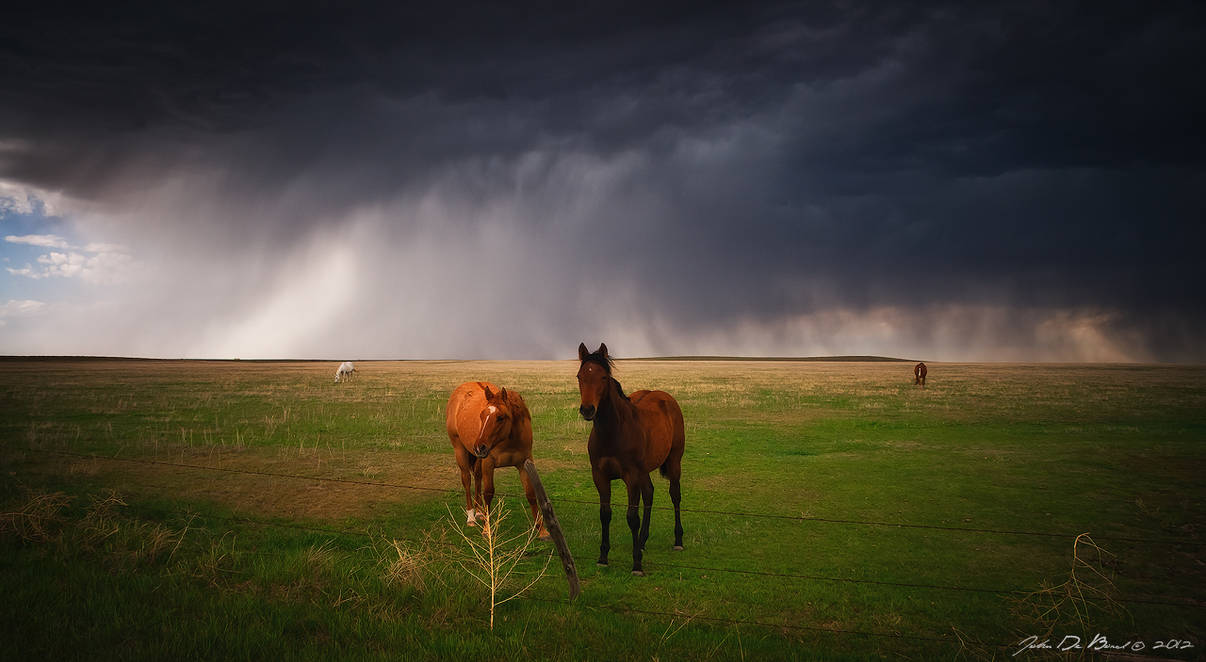 Horses In The Storm by kkart